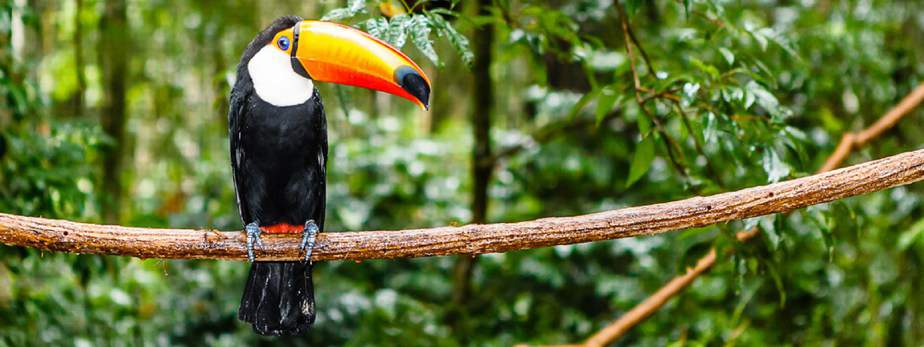 What's the Best Way to Explore the Amazon? | MOSAIC TRAVEL